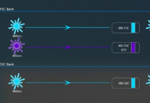 Multiple scatter options